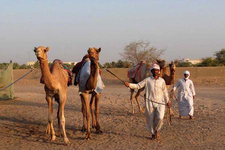 Верблюжий рынок Аль-Айна