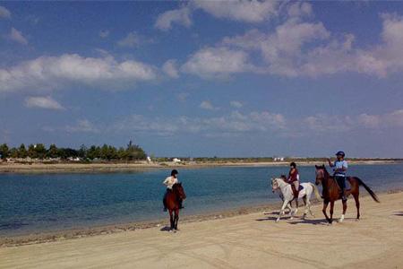 Конный клуб Dhabian Equestrian