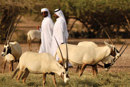 Arabian Wildlife Park
