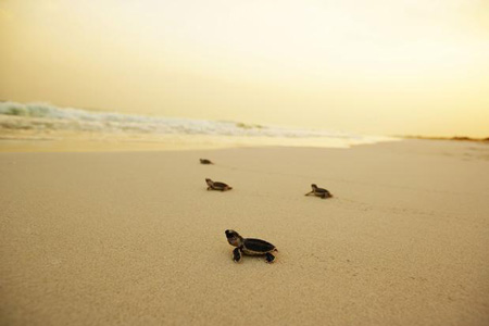 La plage de Saadiyat