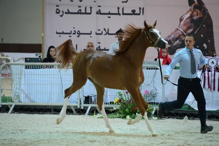 Hh Sheikh Sultan Bin Zayed Al Nahyan Int L Equestrian